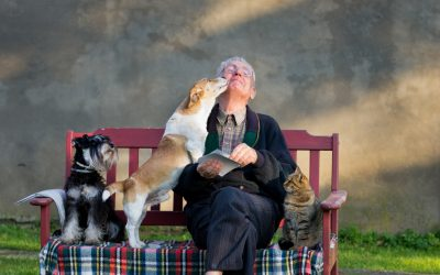 Companion Animals and the Elderly